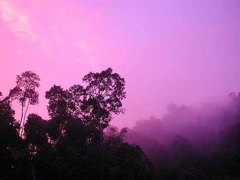 misty forest against a bright purple sky