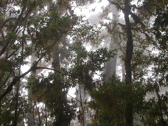 misty forest canopy in Costa Rica