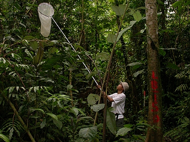 scientist catching bugs with a net in Costa Rican jungle