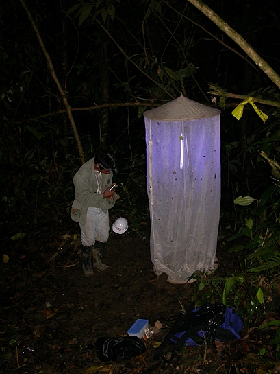 scientist examining insects on a collecting tent