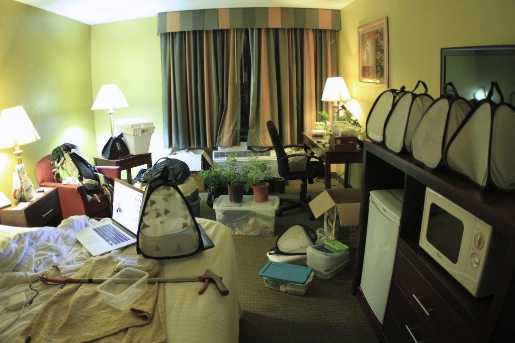 hotel room filled with bug gathering equipment and samples