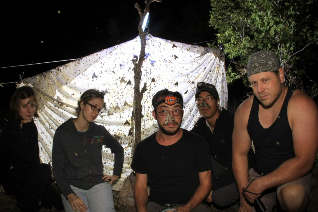 Kawahara lab scientists posing for a photo with an illuminated sheet covered in bugs behind them