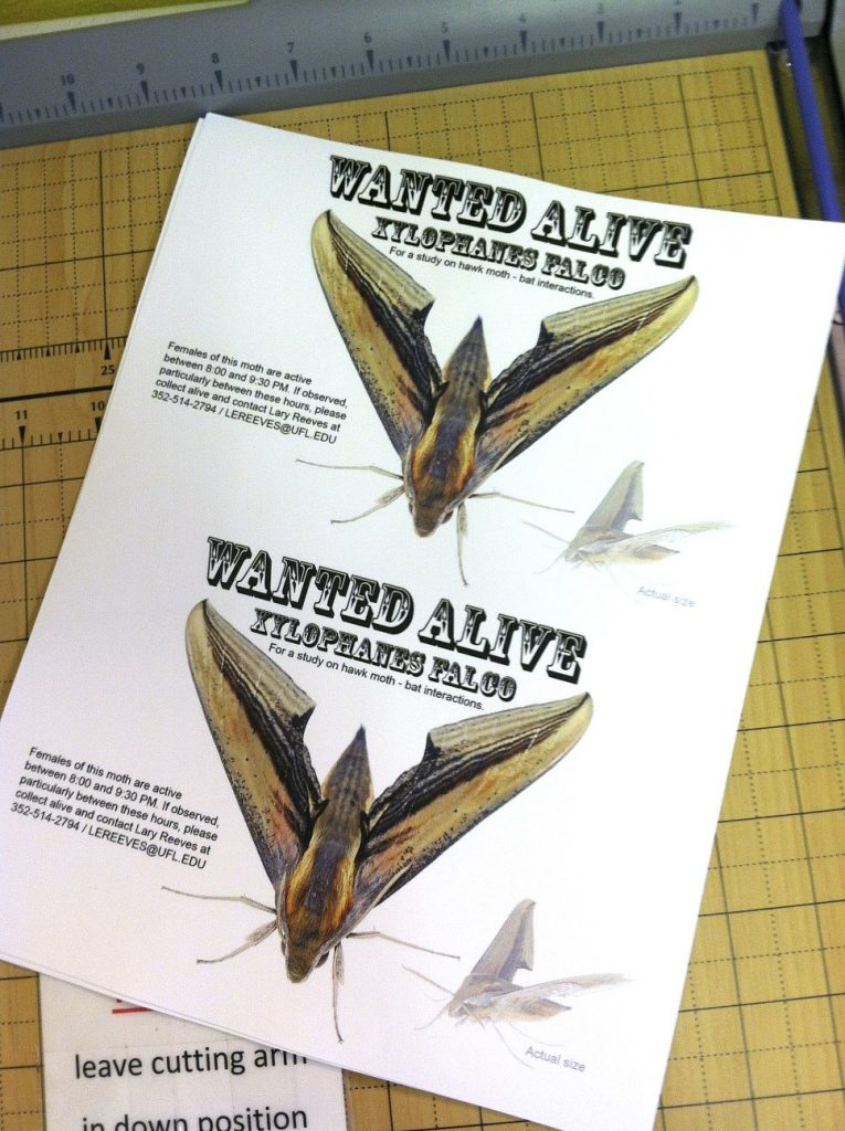 """Wanted"" poster for xylophanes falco"