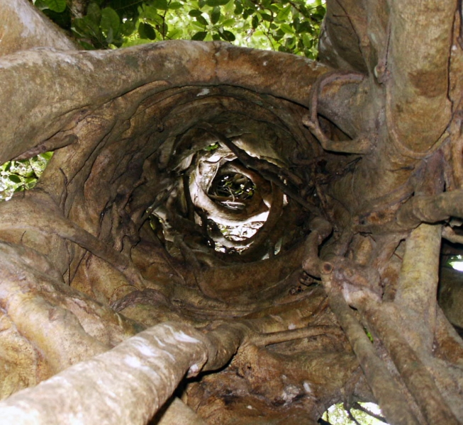 looking through tree trunk
