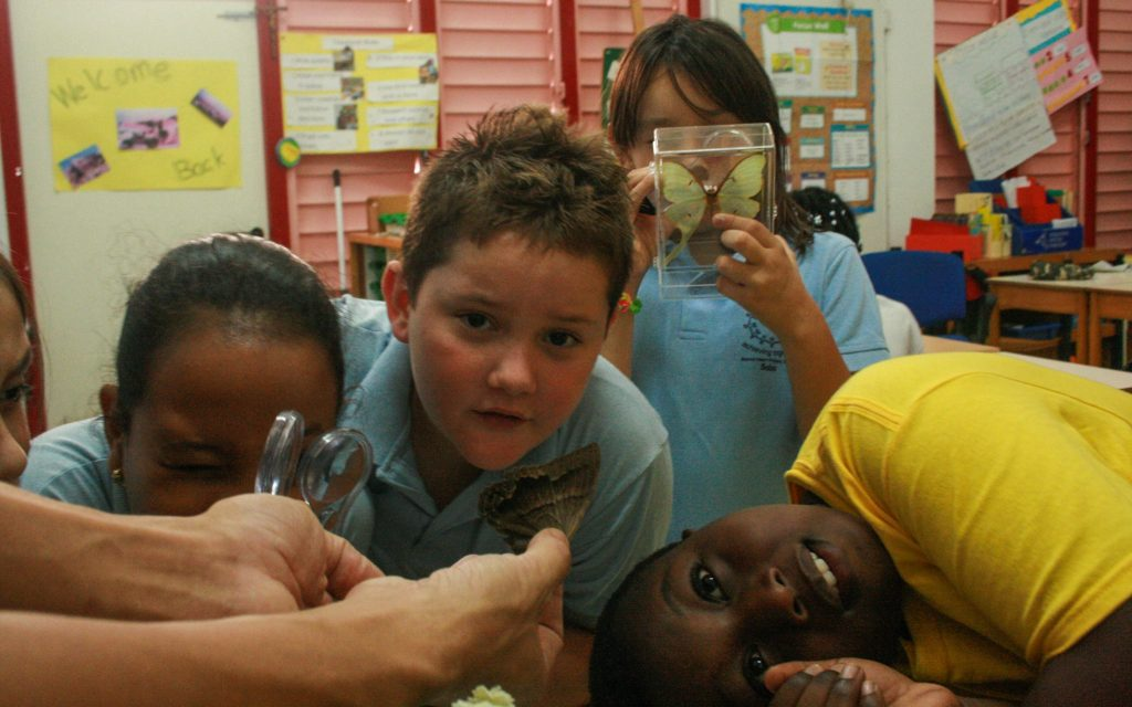 children examining moth and butterfly specimens