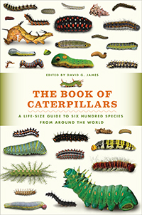 Book of Caterpillars cover