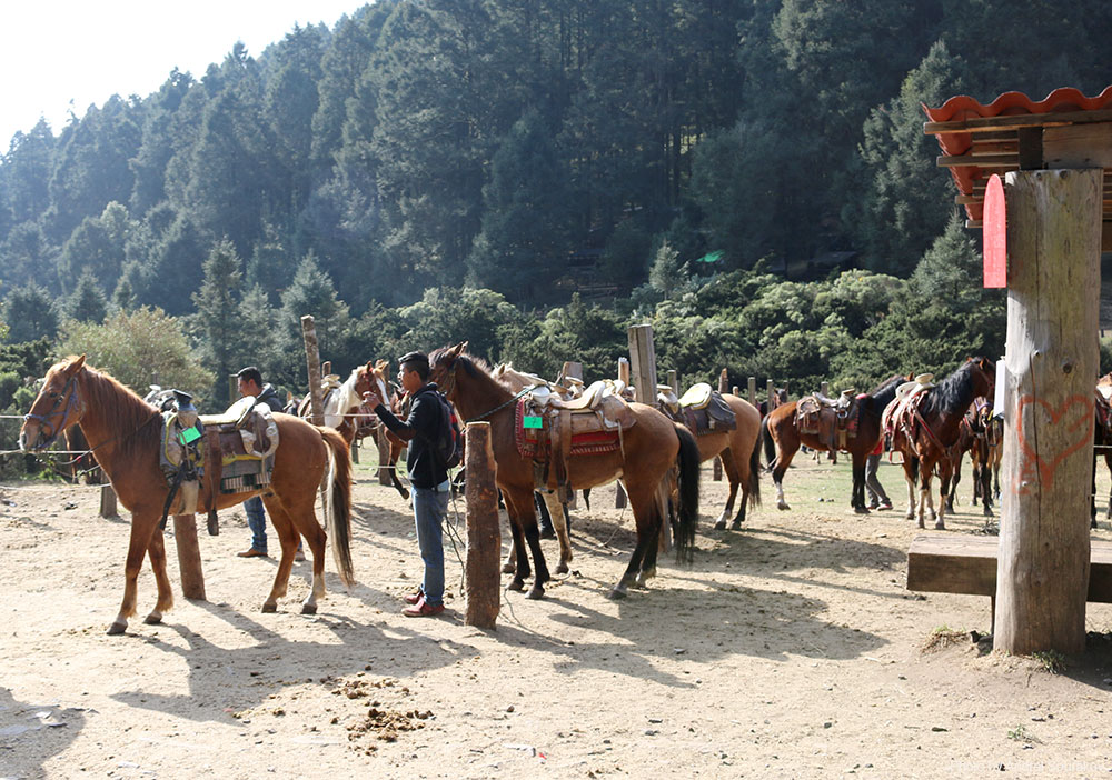 Horses lined up to travel to El Rosario and Sierra Chincua in the Monarch Butterfly Biosphere Reserve.