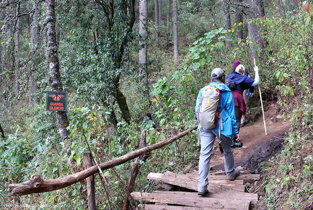 People hiking to El Rosario and Sierra Chincua in the Monarch Butterfly Biosphere Reserve.