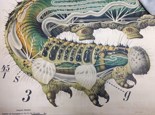 Caterpillar anatomy poster