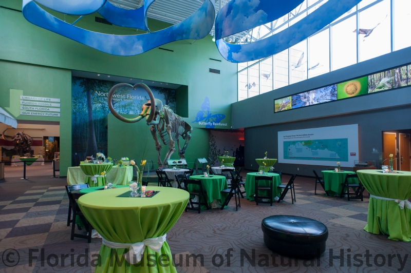 Denny set for a springtime reception, with seated and standing pubs covered in various green linens, with the mammoth skeleton in the background