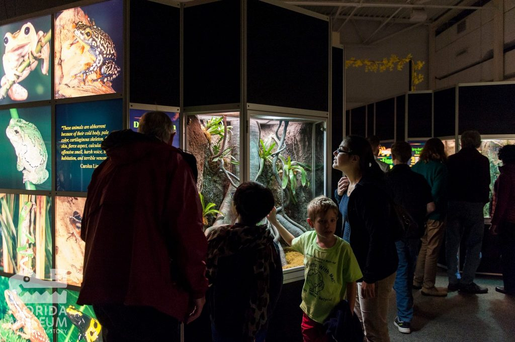 Featured Exhibit: Frogs!