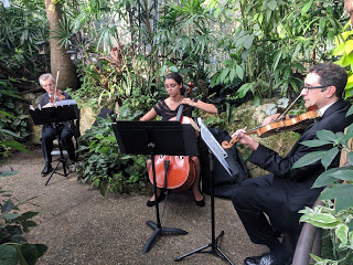 A string trio performs in the Rainforest.
