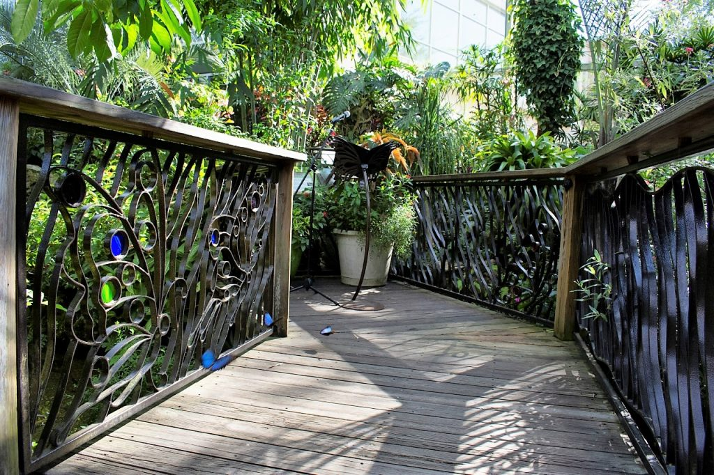 Bridge in Butterfly Rainforest with microphone and butterfly stand, waiting for ceremony. Blue morpho butterflies chase each other.