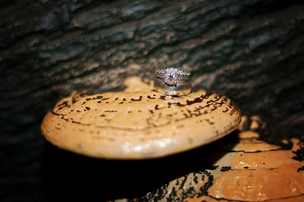 wedding rings placed on mushroom from a log in the Northwest Florida exhibit