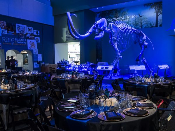 tables set with mammoth in blue