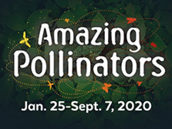 """Amazing Pollinators Exhibit logo text with """"Jan. 25-Sept. 7, 2020"""""""