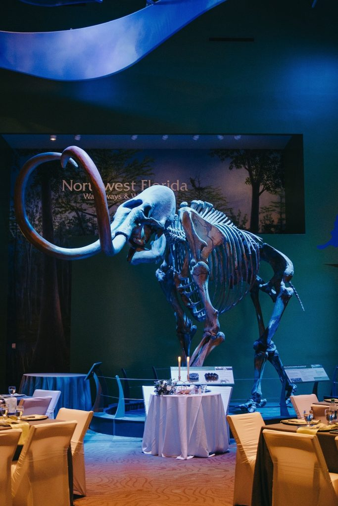 mammoth skeleton in light blue lightsing with sweetheart table in front