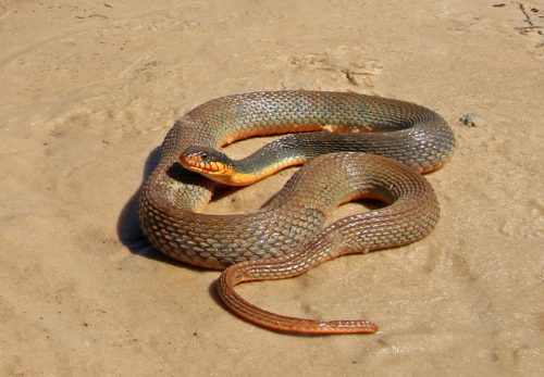 brown snake on sand