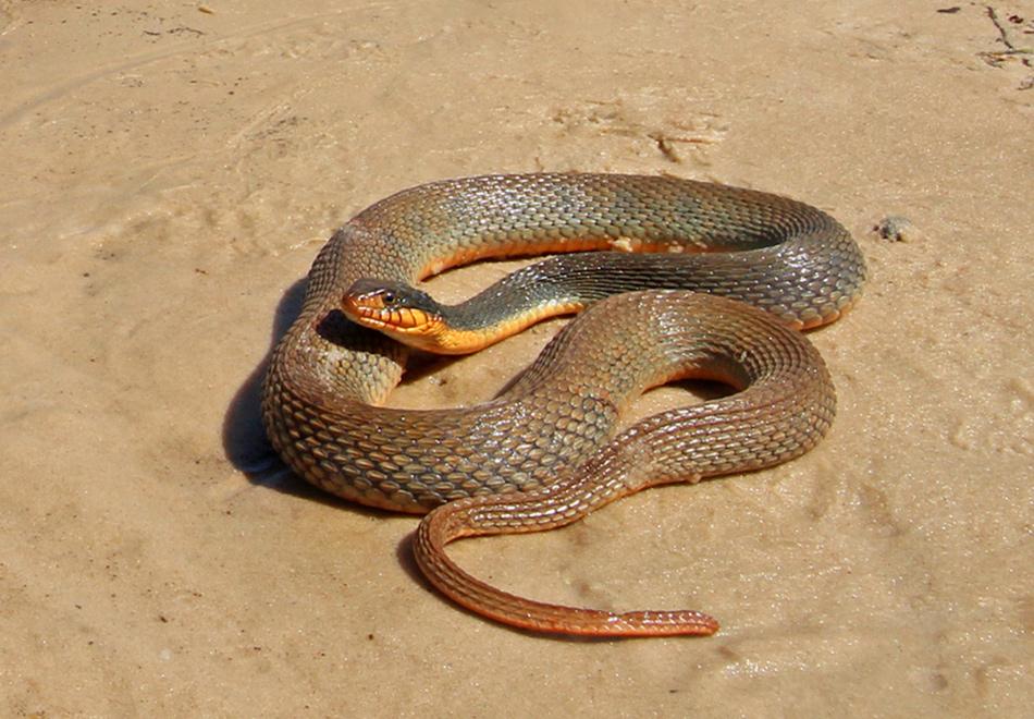 brown snake on sand