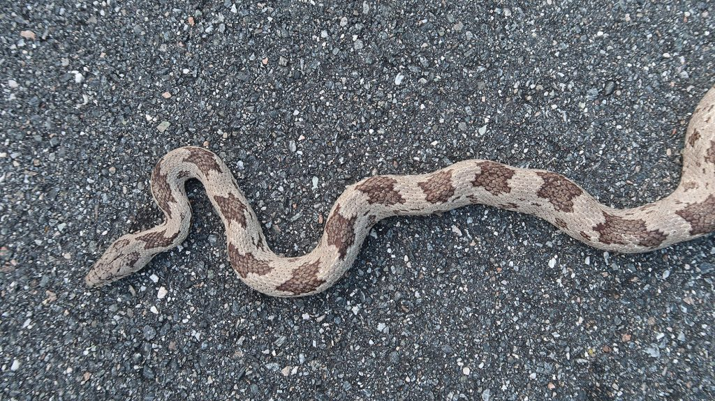 snake seen from above