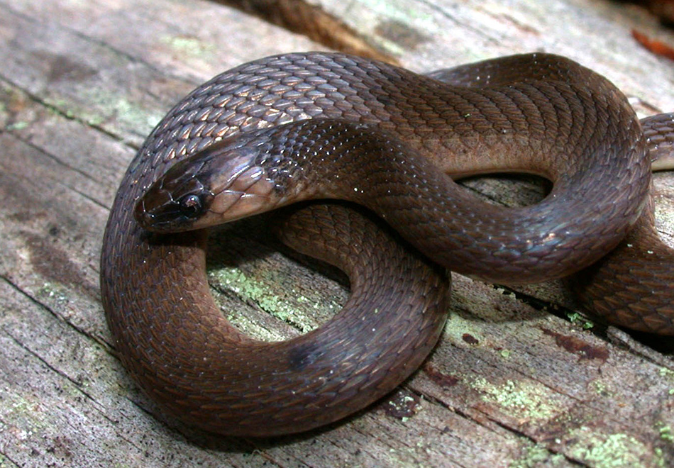 brown snake coiled on a log