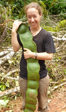 person holding a very large seedpod