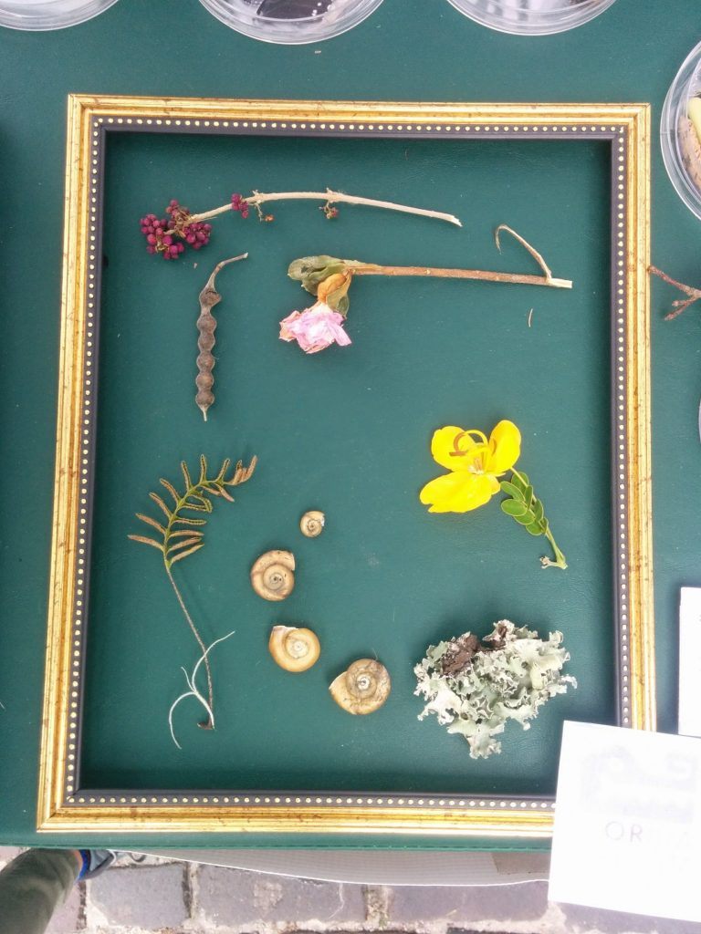 frame with flowers leaves and rocks