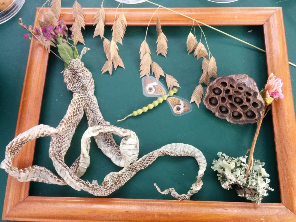 frame with dried flowers and a snake shed