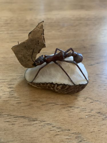 Carving of leaf-cutter ant