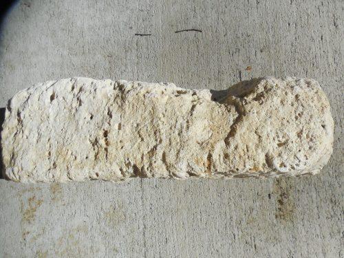 Ocala limestone