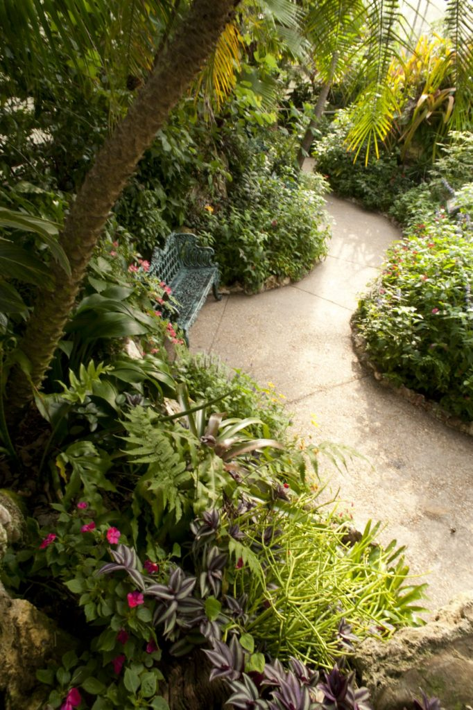 A path in the Butterfly Rainforest