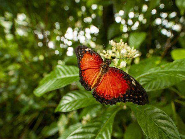 orange butterfly on a green leaf
