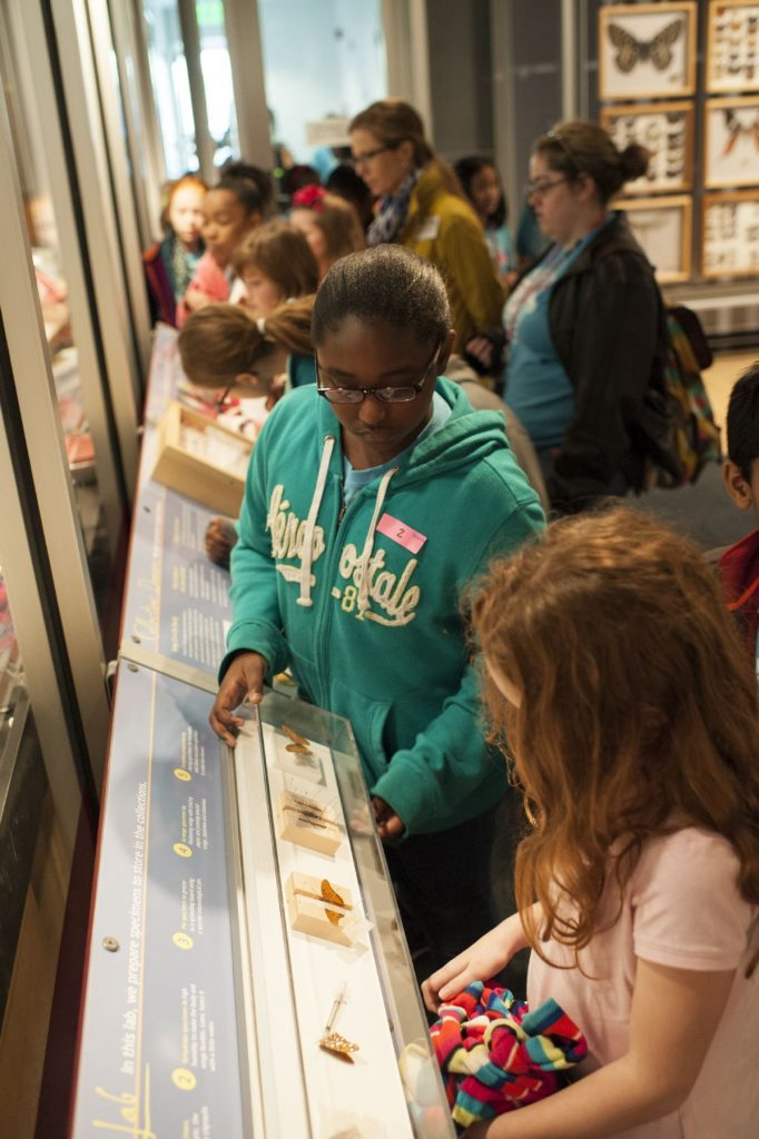 several school children examine a row of panels in a museum exhibit
