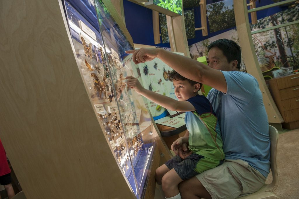a parent and child sitting in front of a museum case pointing at moths on display