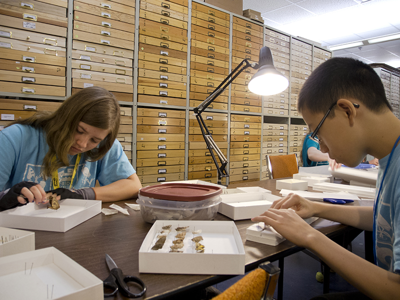 Junior Volunteers can help behind the scenes as collections assistants.