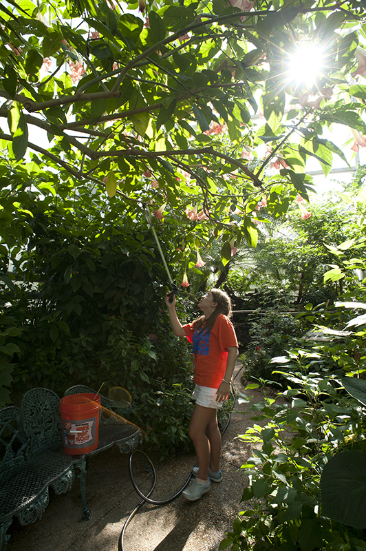 Junior Volunteers can assist in the Butterfly Rainforest exhibit.