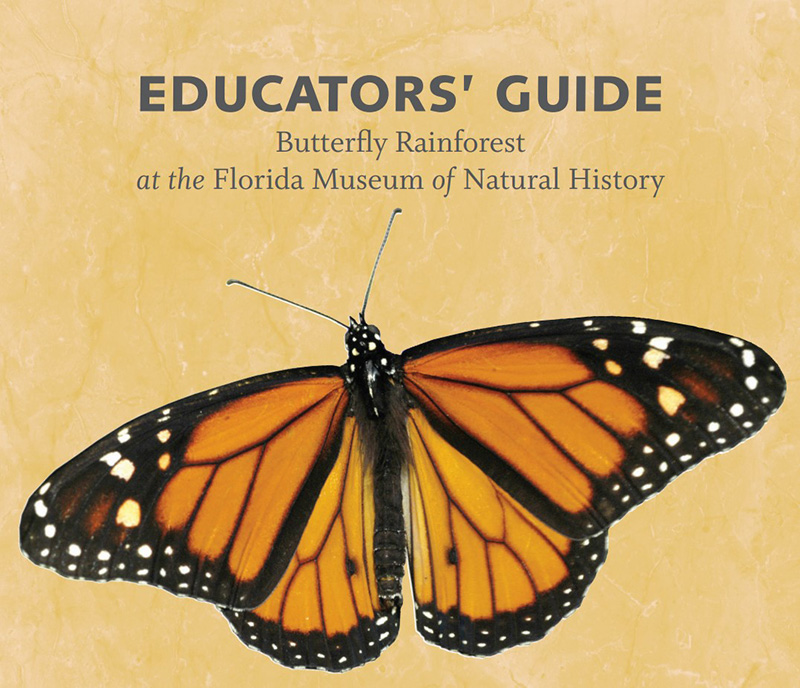butterfly rain forest guide