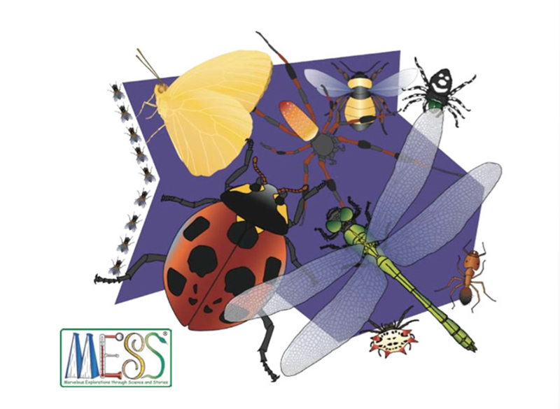drawings of insects