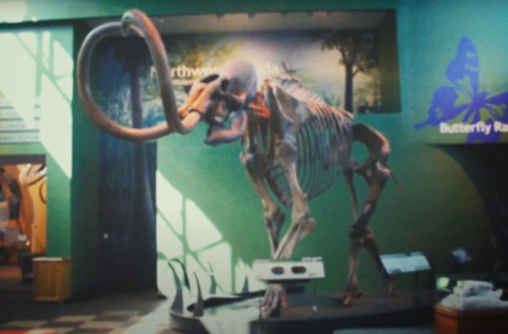 mammoth skeleton in museum lobby