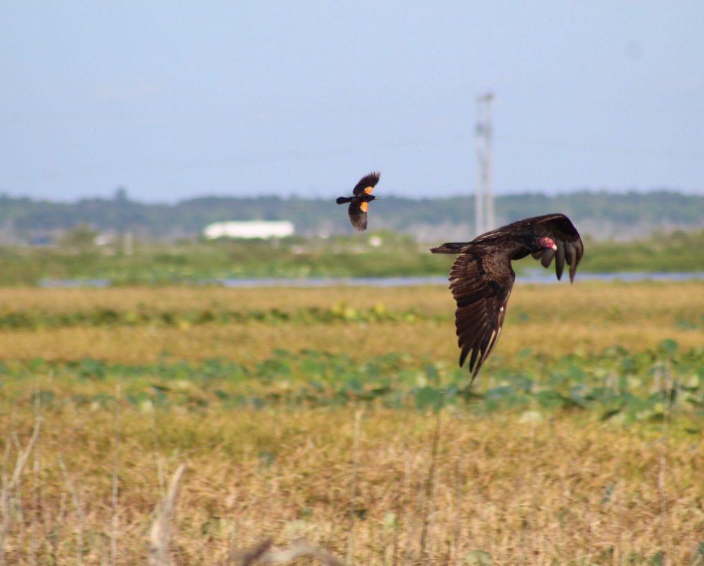 2 birds flying over prairie