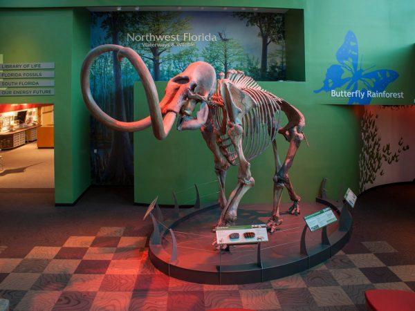mammoth in museum