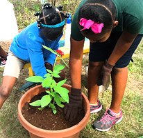 Kids planting in a pot
