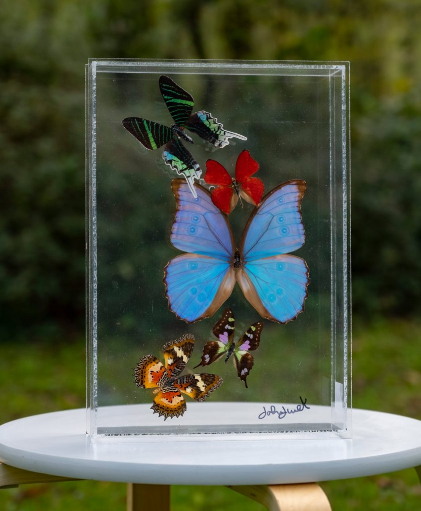 clear acrylic box with mounted butterflies displayed