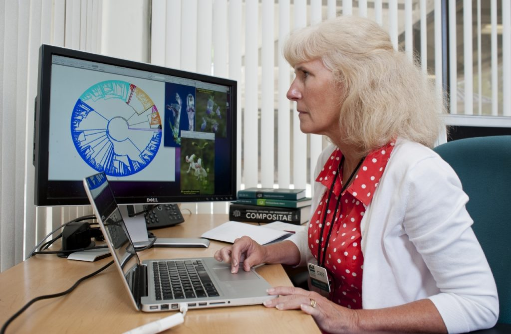 Pam Soltis working on computer featuring Tree of Life