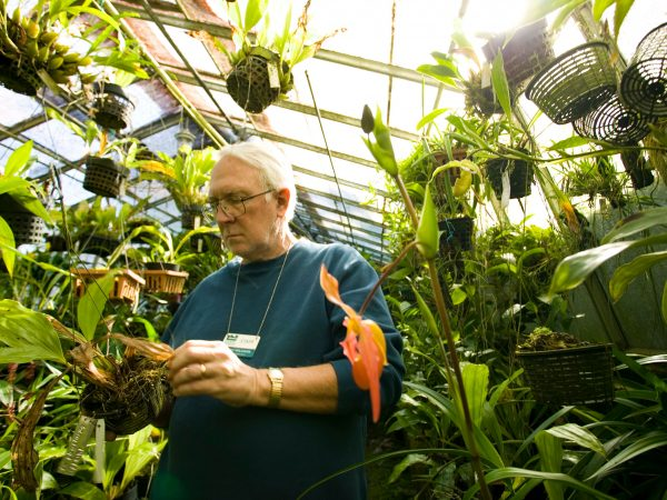botanist in orchid greenhouse