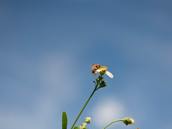 bee on flower against blue sky