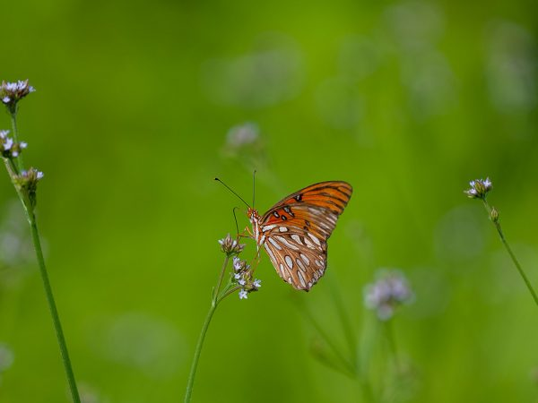 orange butterfly on field of green grasses