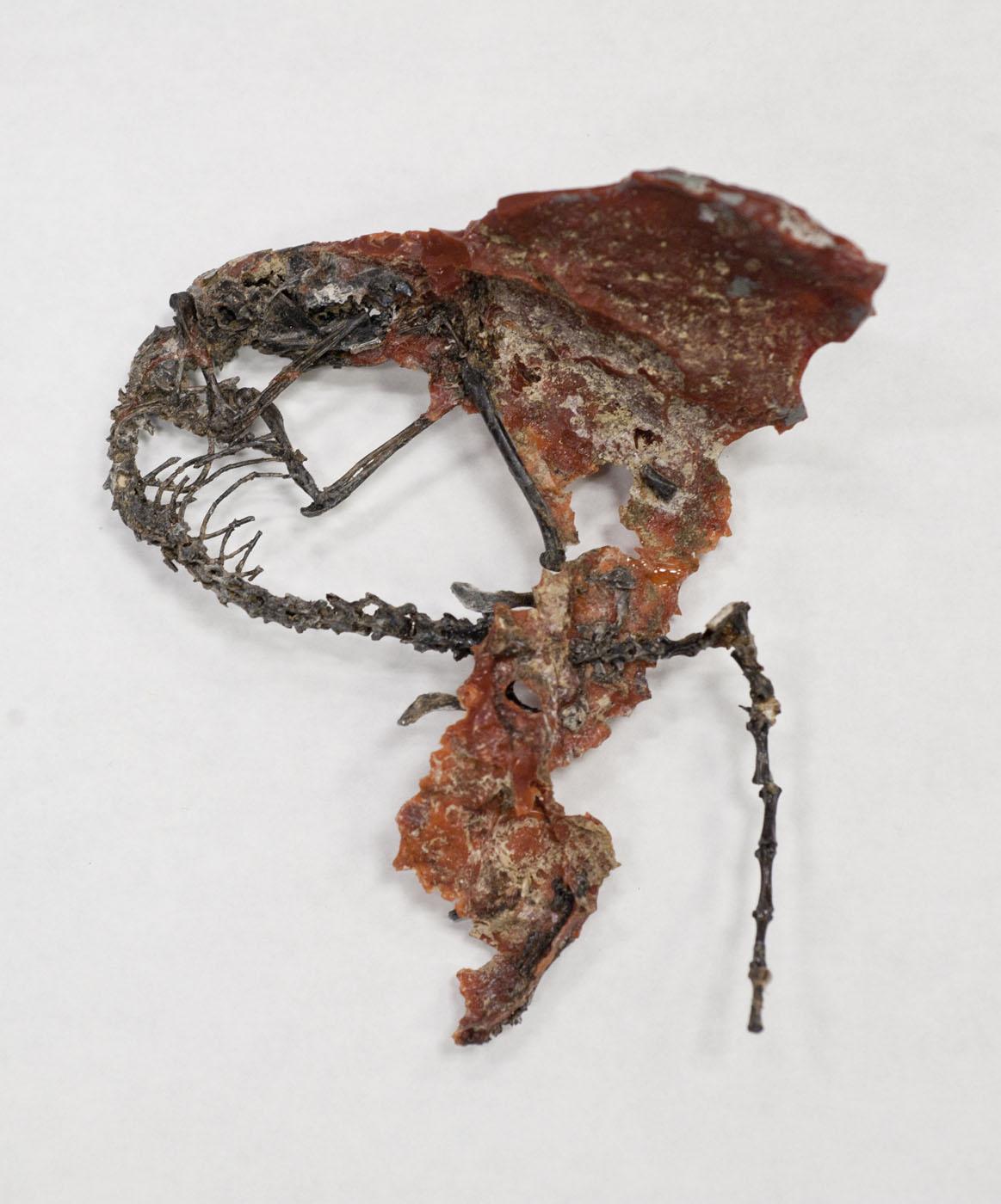 strange lemur skeleton