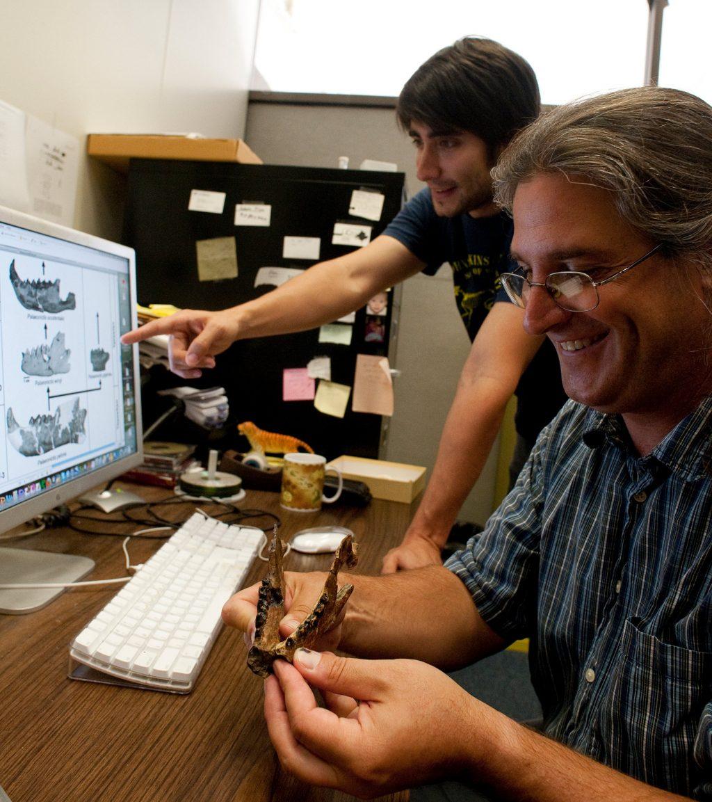 Examining fossil jaw