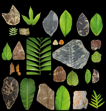 fossils and present day plants